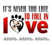 Adopt a shelter pet today!