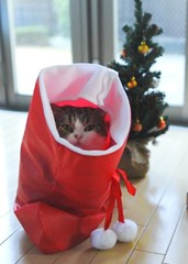 maru-in-the-christmas-stocking1
