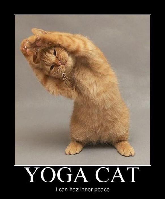 Friday Films: Yoga Cat « Adopt A LAPCAT