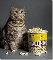 cat-popcorn