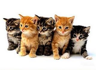 Petsmart Sacramento Cat Adoption