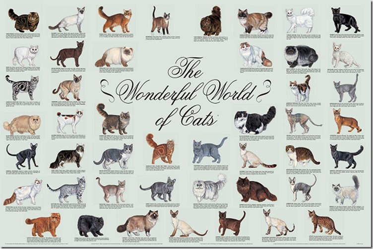 Poster available from Cat Fancier's Association (CFA)