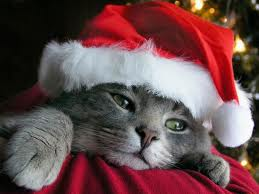 the animals of you tube sing jingle bells to you - You Tube Christmas Carols