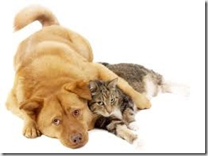 yellowdog-graycat