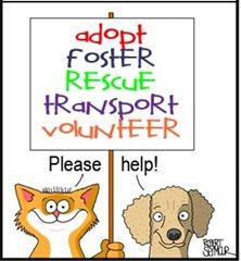 AAP-AdoptFoster