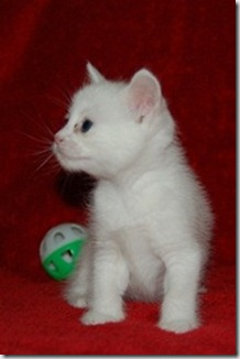 Kittens 003 - Copy