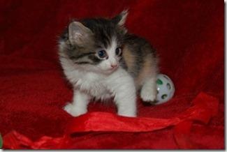 Kittens 007