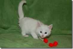 Kittens6thWeek 003
