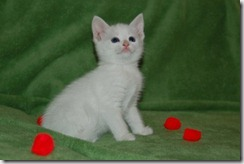 Kittens6thWeek 013