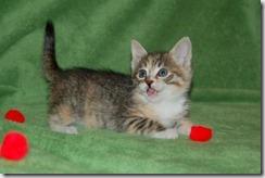 Kittens6thWeek 016