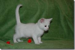 Kittens6thWeek 021