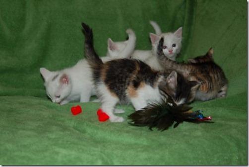 Kittens6thWeek 024