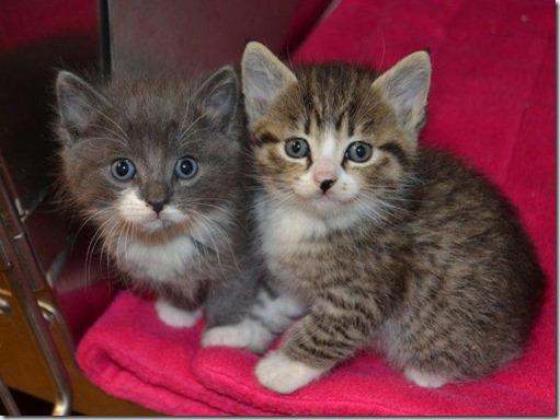 Kitten_A594143