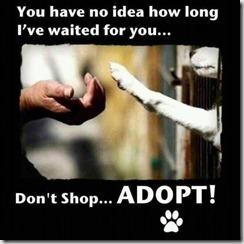 Adopt High5