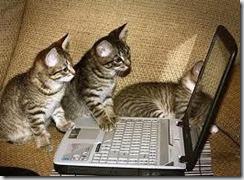 Kittens on Keyboard