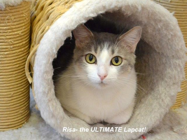 Petsmart Sacramento Cat Adoption