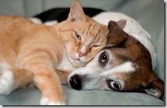 Orangecat-terrier