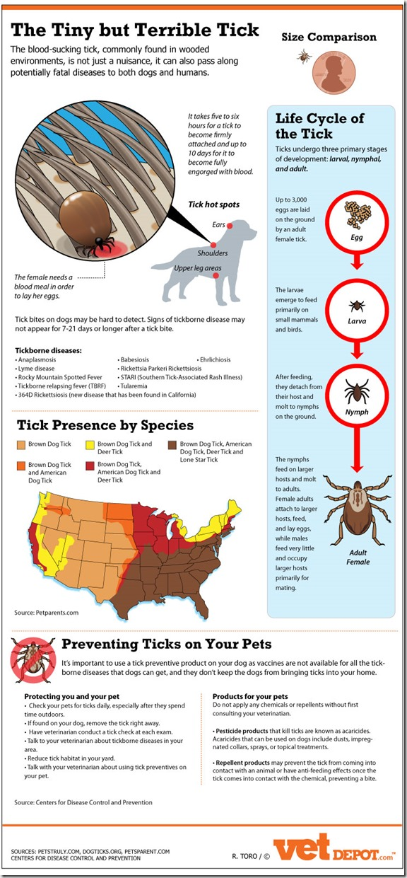 Ticks-tiny-but-terrible-tick